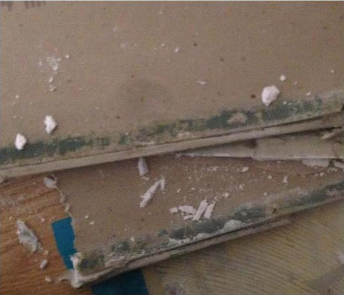 pieces of removed drywall covered in green mold